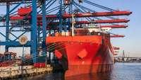 Rotes Frachtschiff mit Kränen im Hafen