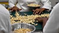 Cashew-Sortierung in einer westafrikanischen Fabrik